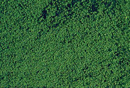 Filet de mousse vert foncé - HEKI 1602
