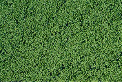 Filet de mousse vert moyen - HEKI 1601